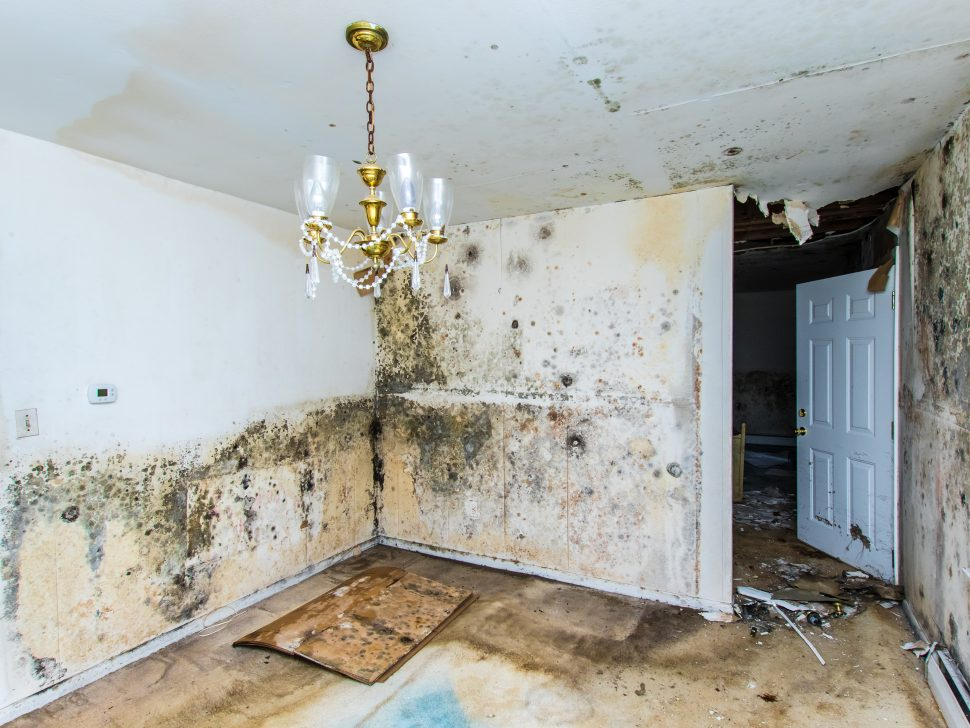 8 Things That Happen When You Leave Water Damage Untreated - Central Oregon Disaster Restoration